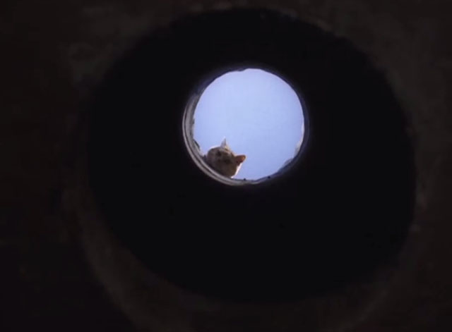 Mannix - Deadfall: Part Two - orange tabby cat looking down air shaft