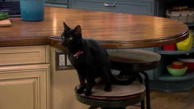 Melissa and Joey - Witch Came First - black cat close on stool