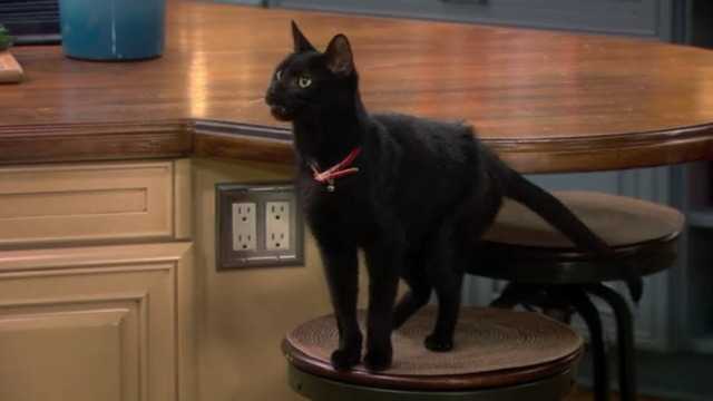 Melissa and Joey - Witch Came First - black cat on stool