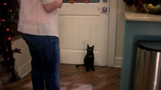 Melissa and Joey - Witch Came First - black cat at door