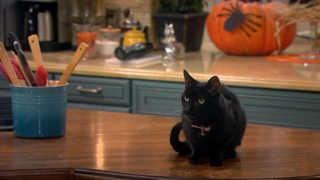 Melissa and Joey - Witch Came First - black cat on counter