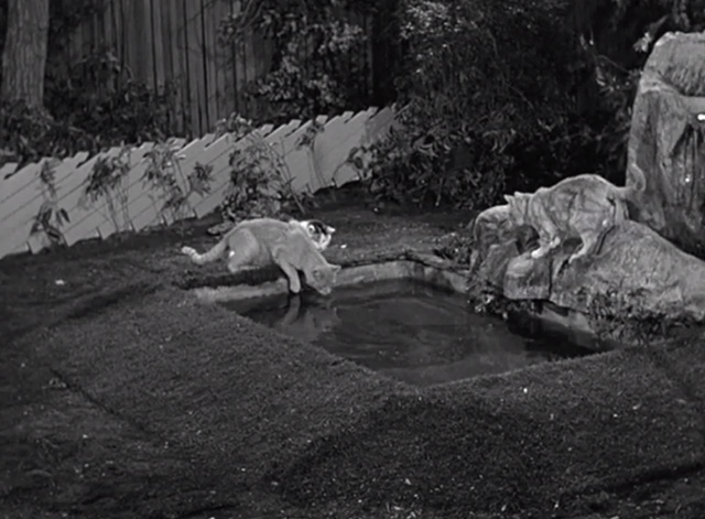 Mister Ed - Mister Ed's Word of Honor - cats gathered around Roger Addison's backyard fish pond
