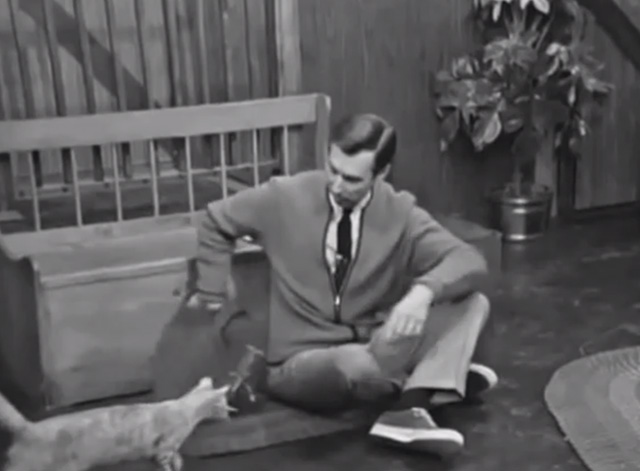 Mister Rogers' Neighborhood - Blackberry tabby cat approaches Fred Rogers