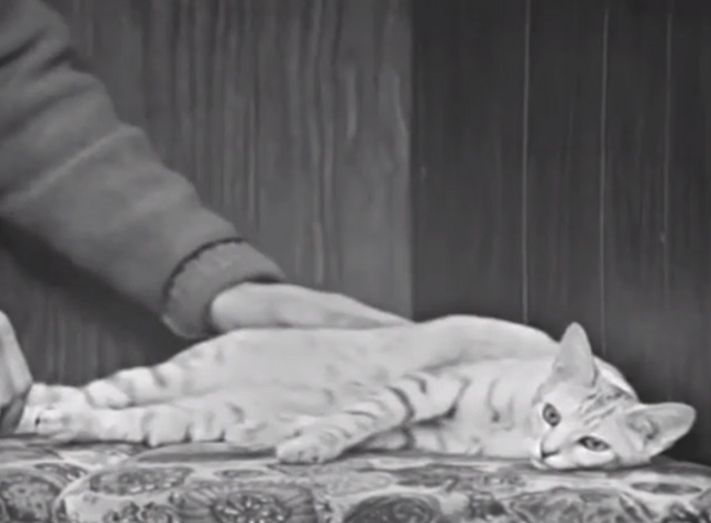 Mister Rogers' Neighborhood - Blackberry tabby cat on cushioned bench being petted by Fred Rogers