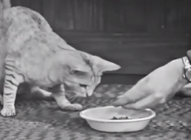 Mister Rogers' Neighborhood - Blackberry tabby cat being offered food by Fred Rogers