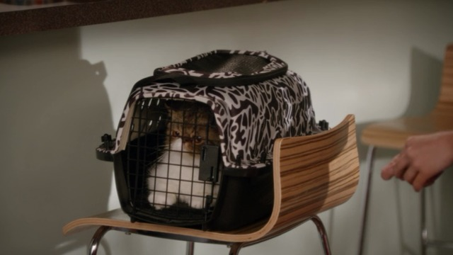 New Girl - Nerd - Ferguson Scottish fold cat in carrier
