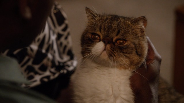 New Girl Quot Nerd Quot Cinema Cats