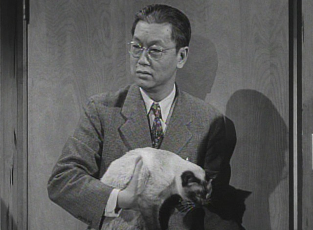 Perry Mason - The Case of the Caretaker's Cat - Siamese cat carried by Hing