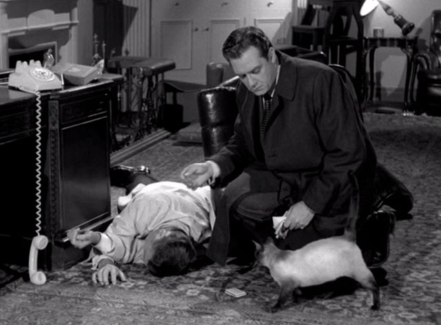 Perry Mason - The Case of the Silent Partner - Siamese cat approaching Perry Mason Raymond Burr and dead body