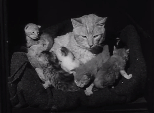 Petticoat Junction - The Little Train Robbery - tabby cat Miranda Orangey in safe with kittens