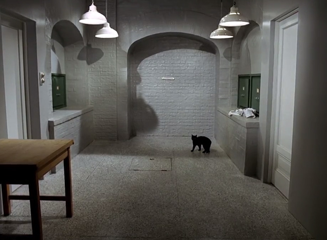 The Prisoner - Dance of the Dead black cat alone in room