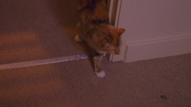 Psych - 9 Lives - calico cat Little Boy Cat coming into room