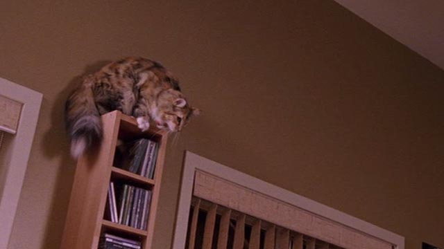 Psych - 9 Lives - calico cat Little Boy Cat about to jump off bookcase