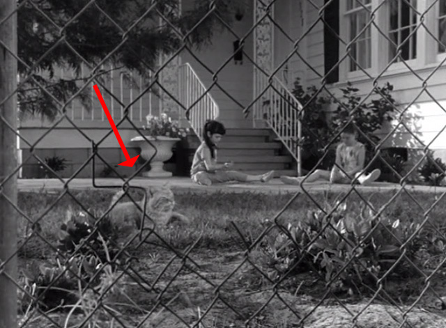 Route 66 - Shadows of an Afternoon - tabby cat on lawn behind chain link fence with two girls
