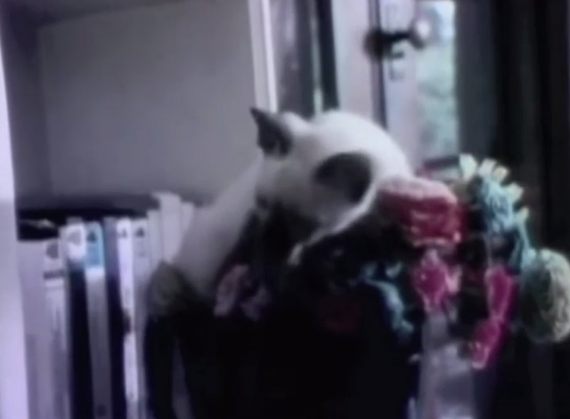 Sesame Street - My Kitten - Siamese kitten Dusty lying on flowers