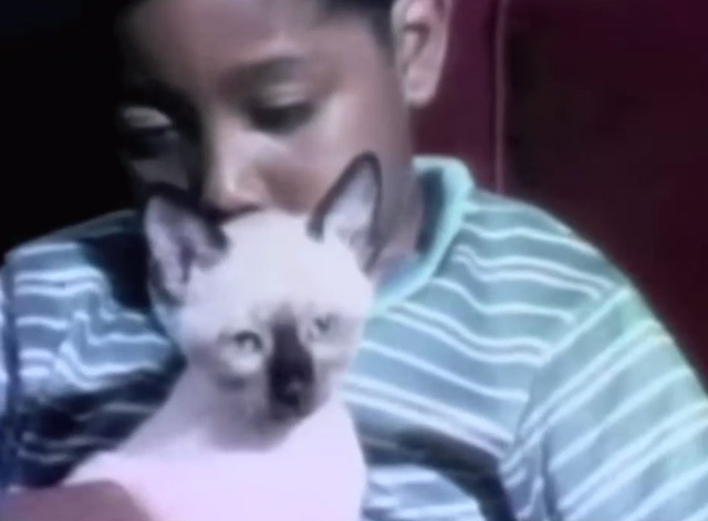 Sesame Street - My Kitten - close up of Siamese kitten Dusty being held by little boy