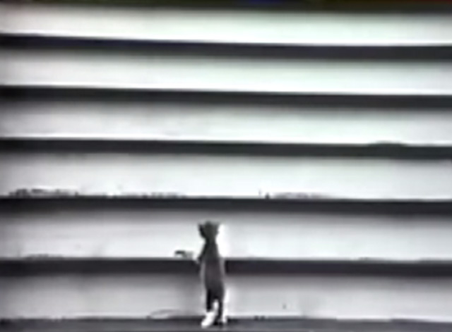 Sesame Street - Trying and Trying again - grey and white tuxedo kitten climbing stairs