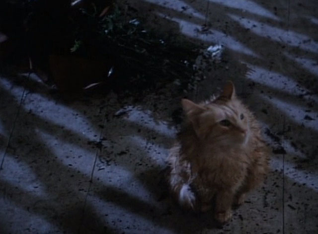 Tales From the Crypt - Collection Completed - orange tabby cat Mew Mew wet on front step