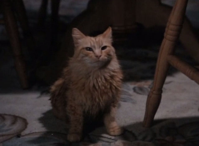Tales From the Crypt - Collection Completed - orange tabby cat Mew Mew