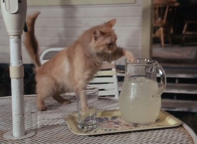 Tales From the Crypt - Collection Completed - orange tabby cat Mew Mew pawing at pitcher of lemonade