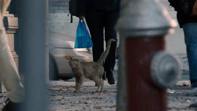 This is Us - Clooney - orange tabby cat with bent ear on sidewalk of city