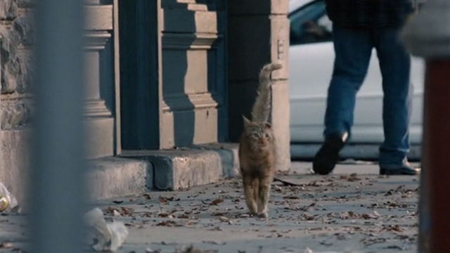 This is Us - Clooney - orange tabby cat with bent ear walking on sidewalk of city