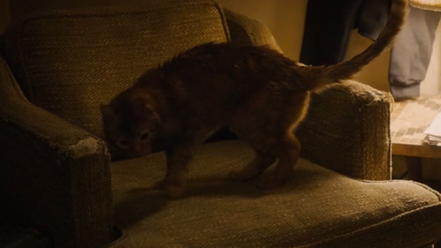 This is Us - Clooney - orange tabby cat Clooney with bent ear jumping into chair