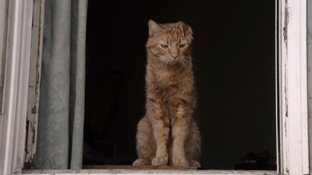 This is Us - Clooney - orange tabby cat Clooney with bent ear sitting in window