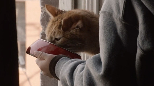 This is Us - Clooney - orange tabby cat Clooney with bent ear eating from bowl being held by boy