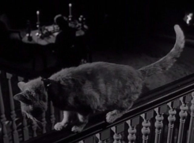 Thriller - The Poisoner - orange tabby cat Hermione on railing overlooking man at desk