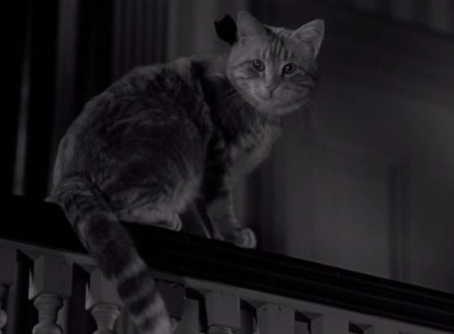 Thriller - The Poisoner - orange tabby cat Hermione looking cute on railing