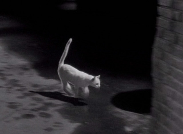 Thriller - Trio for Terror - white cat running across dark street