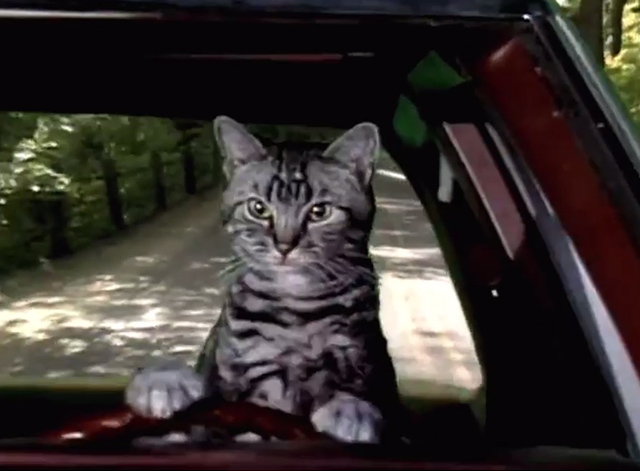 Saturday Night Live - Toonces the Driving Cat - Toonces the Driving Cat theme song cat