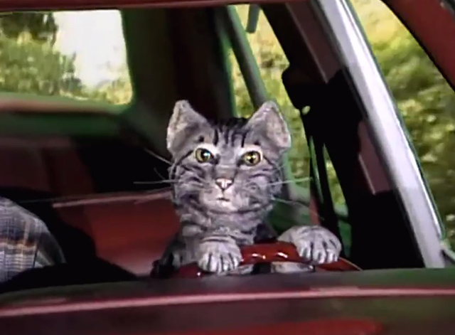 Saturday Night Live - Toonces the Driving Cat - Toonces the Driving Cat puppet cat driving car