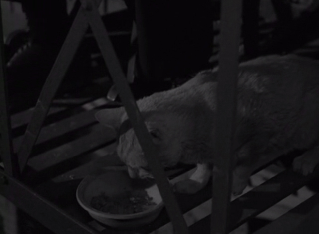 The Twilight Zone - He's Alive - tabby cat eating from bowl on fire escape