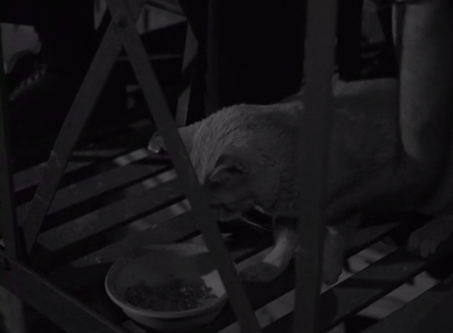 The Twilight Zone - He's Alive - hand reaching down to pick up tabby cat eating from bowl on fire escape