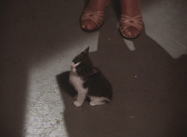 The Waltons - The Fastidious Wife kitten confused on floor