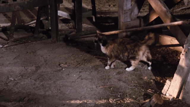 The Waltons - The Loss - large Calico cat hunting in barn
