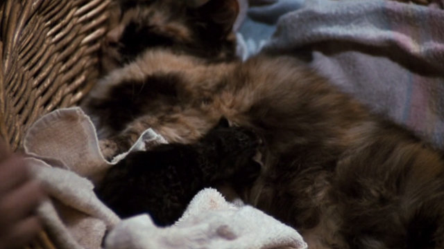The Waltons - The Loss - large Calico cat with tiny black kitten