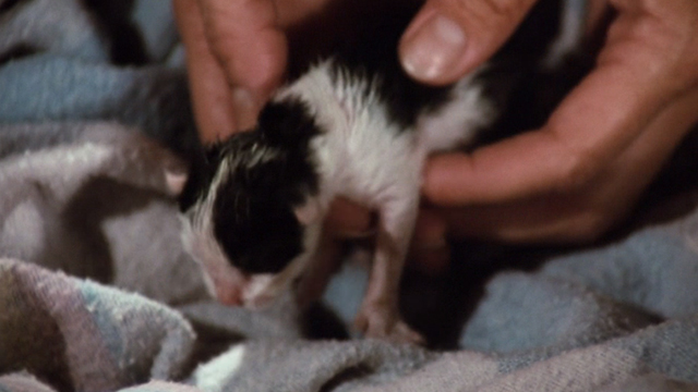 The Waltons - The Loss - tiny black and white kitten