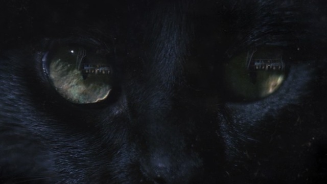 Zoo - First Blood - close up of black cat's eyes