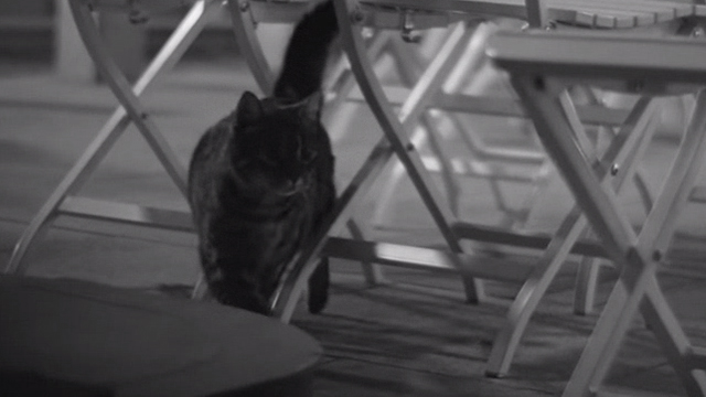 Cine Esti - 3 Sud Est - tabby cat walking beneath outdoor tables