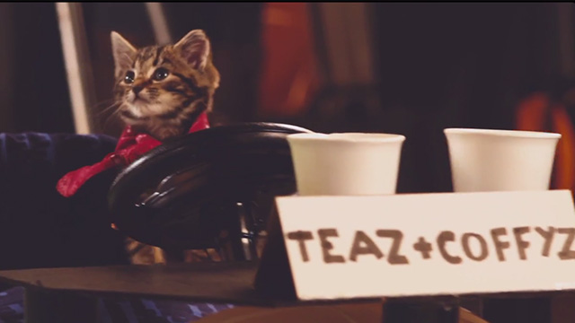 Best Coast - Crazy for You - tabby kitten driving snack cart
