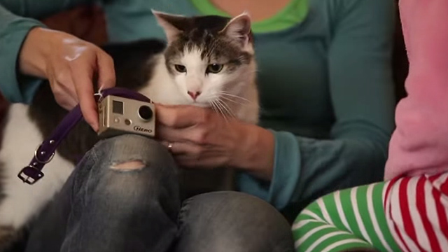 Superchunk - Crossed Wires - white and tabby cat being fitted with video camera