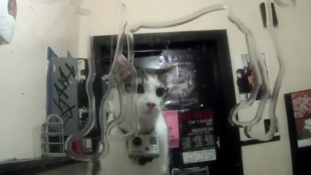 Superchunk - Crossed Wires - white and tabby cat with video camera in bar bathroom mirror