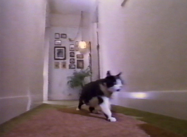 Little Bits and Pieces - Jim Stafford - tuxedo cat running down hallway