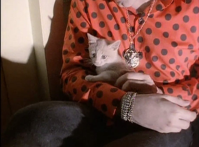 The Love Cats - The Cure - cream colored kitten on lap