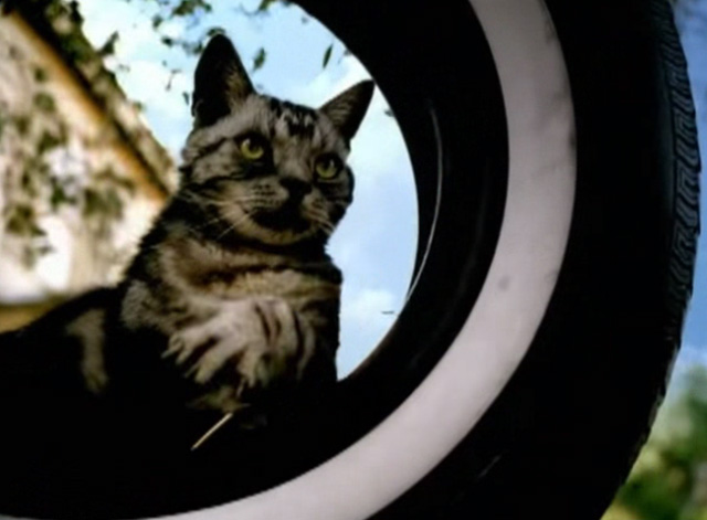 Ms. Jackson - Bengal tabby cat sitting in tire swing