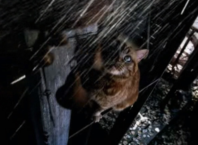 Ms. Jackson - orange tabby cat looking up at rain
