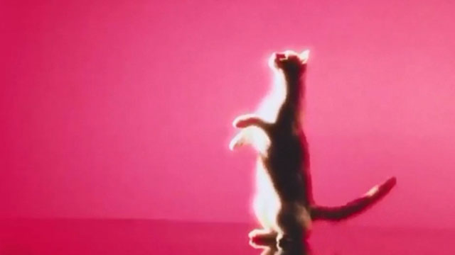 Holy Fuck - Red Lights - cat dancing in front of pink background